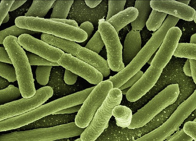 Bakteri E Coli Penyebab Mencret pada Anak